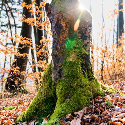 -Sunny Tree Stump- Canon EOS 60D (Sigma 17-70mm F2.8-4 DC Macro C, 17 mm, f/3.5, 1/50s, ISO100)