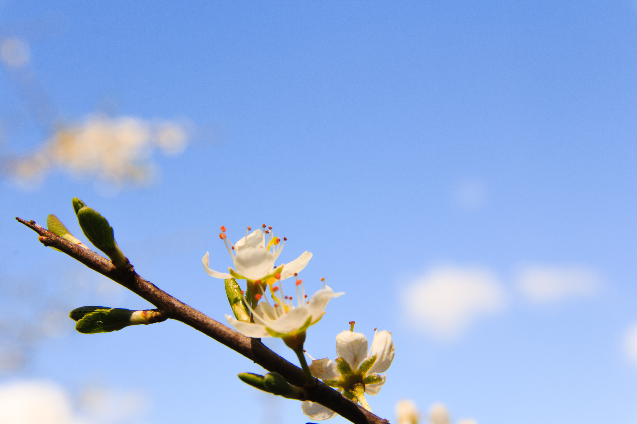 -The Early Blossom- Canon EOS 60D (Sigma 17-70mm F2.8-4 DC Macro C, 70 mm, f/16.0, 1/50s, ISO100)