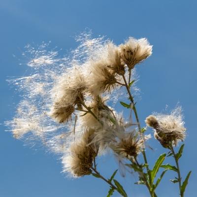 -Sunny Flower- Canon EOS 60D (Sigma 17-70mm F2.8-4 DC Macro C, 70 mm, f/6.7, 1/750s, ISO100)