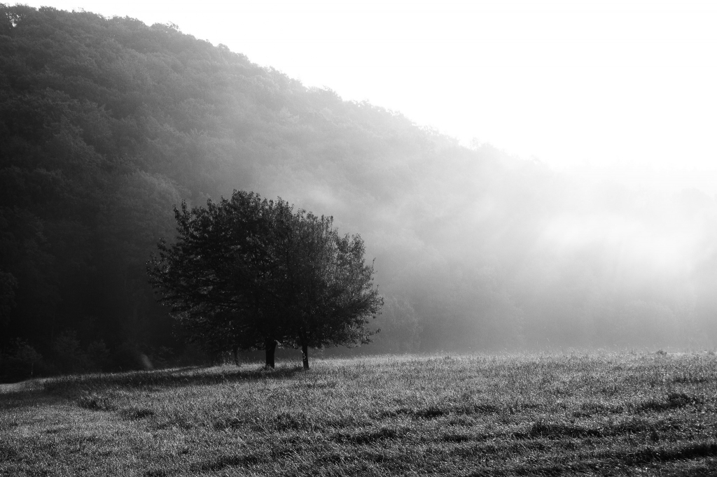 -The Fog- Canon EOS 60D (Sigma 17-70mm F2.8-4 DC Macro C, 37 mm, f/9.0, 1/160s, ISO100)