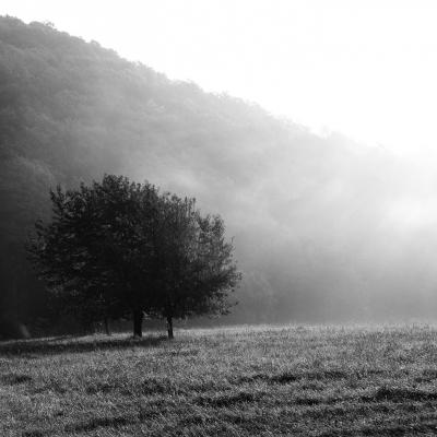 -The Fog [1425]-